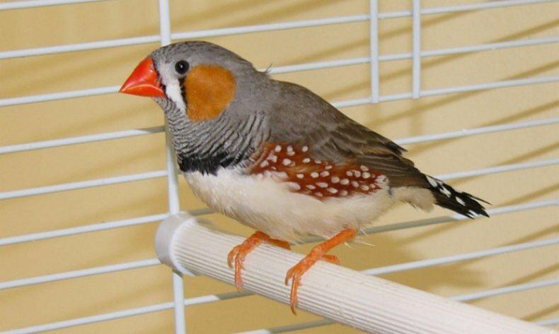 лучшие птицы для дома необычного цвета, камень
