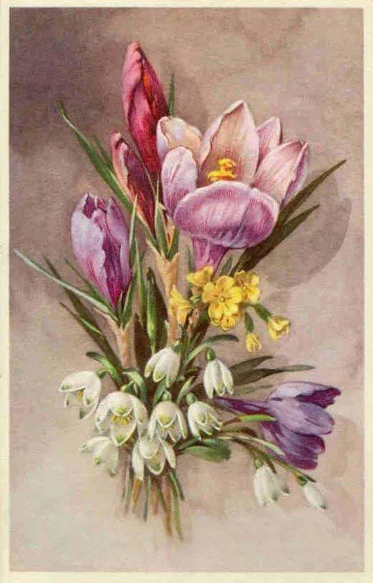 Старинные открытки с тюльпанами, картинках