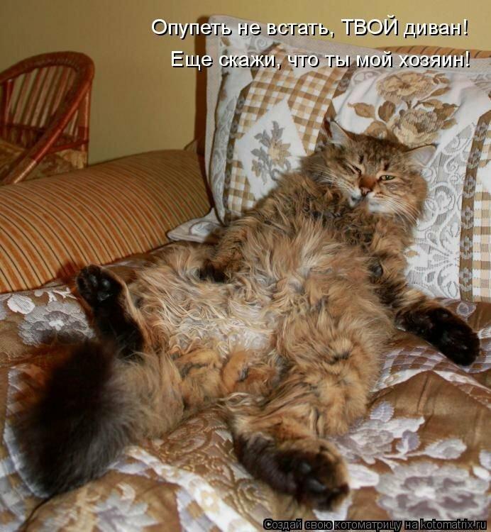 Смотреть смешные картинки про животных с надписью, картинки здорово