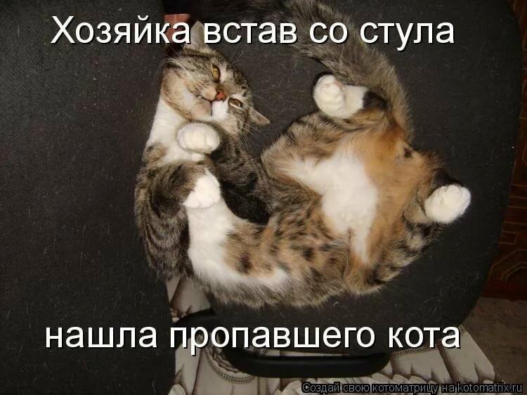 Открытки для, смешные рисунки про кошек с надписями