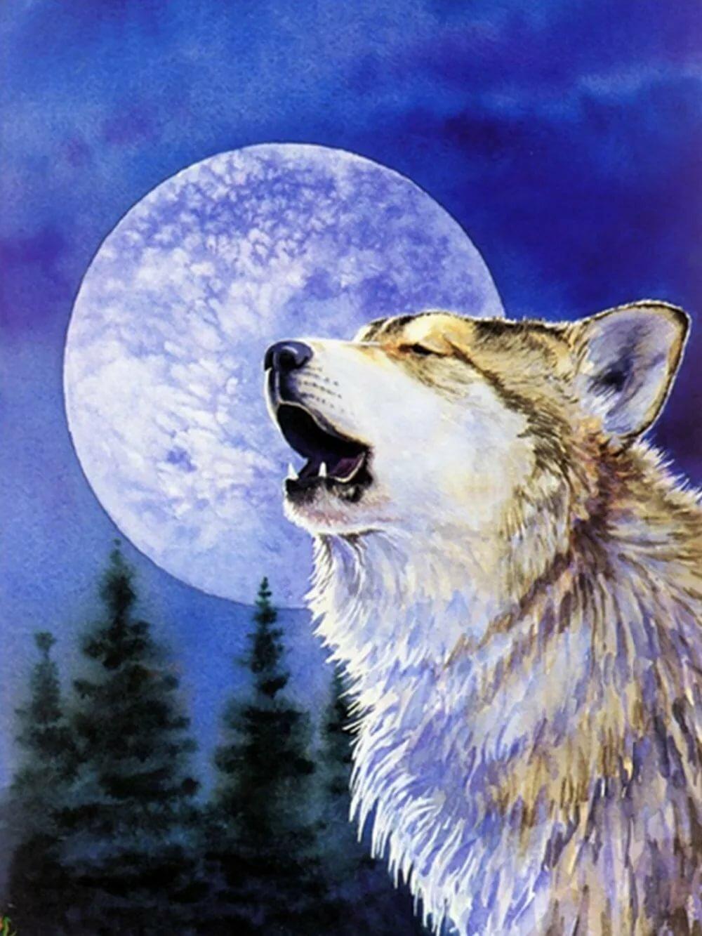 Днем, красивые картинки волков с надписями