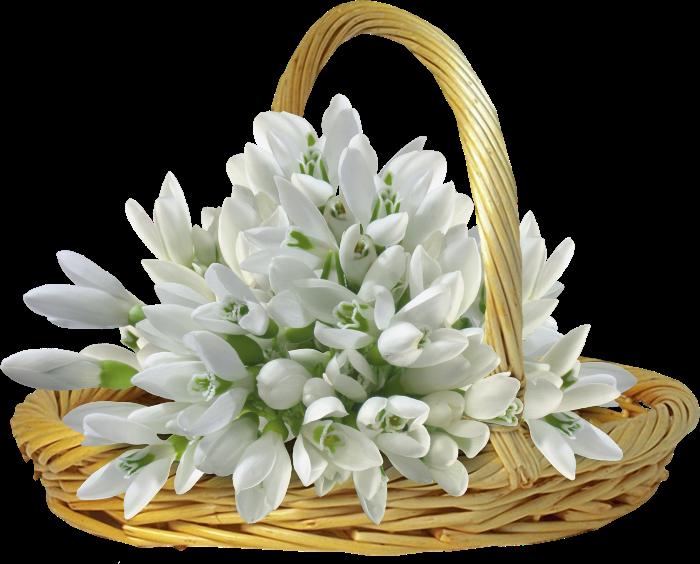 Цветы, букет из цветов подснежников