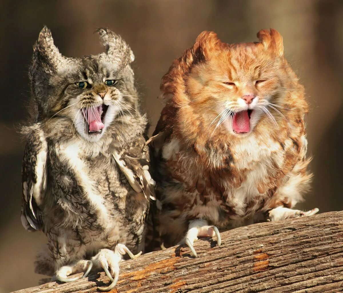 сенсорный картинки совы и котенка декора