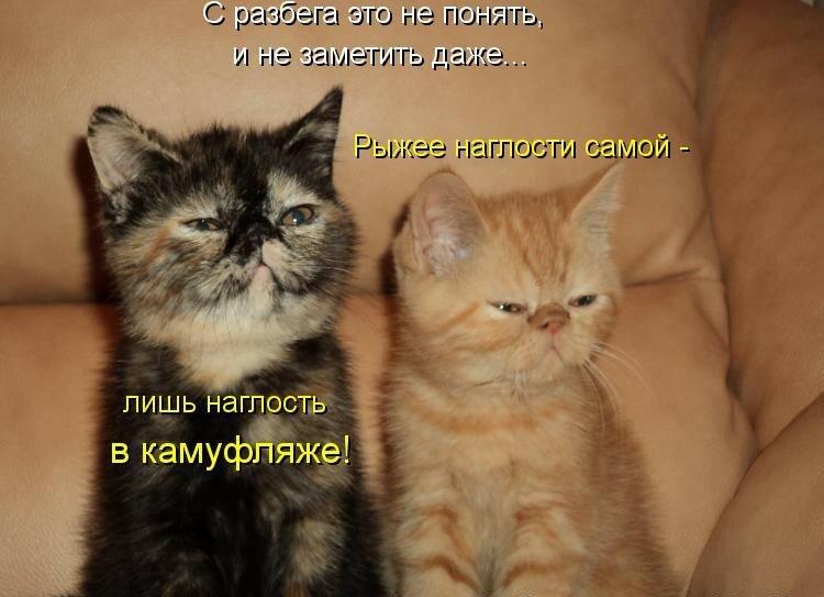 Смотреть картинки смешные с надписями котята, марта 2019