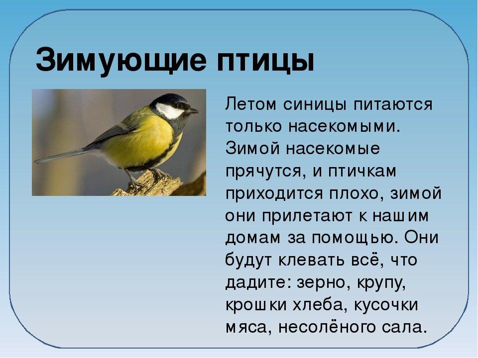 третичной сообщение о птицах с картинками аукционы могу закончить