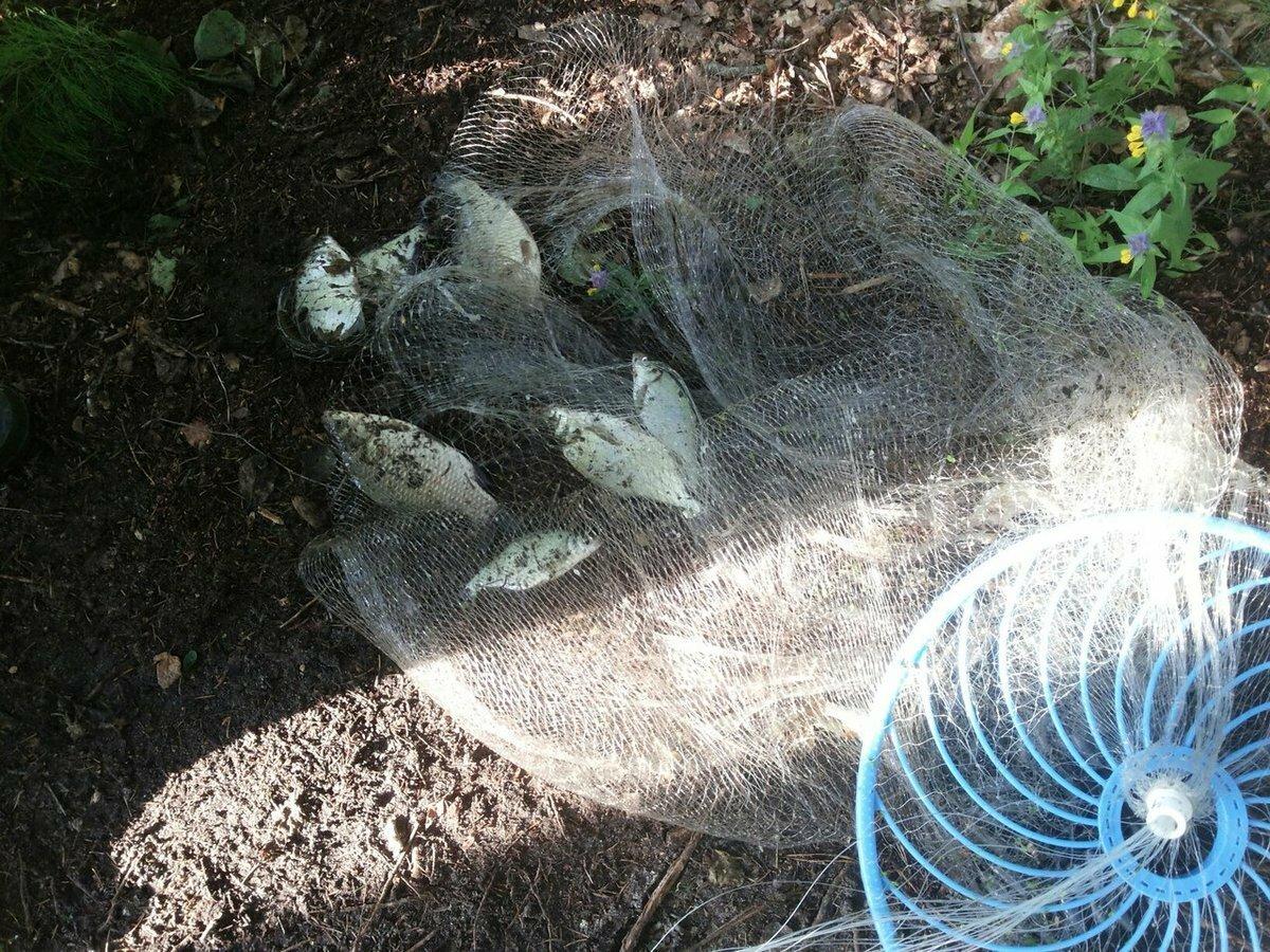 Супер ловушка Findfish во Владикавказе