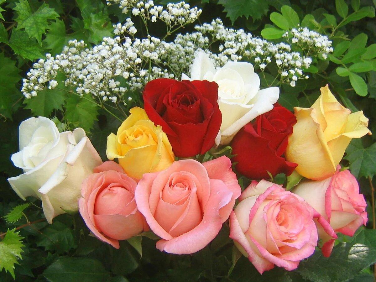 зал минимумом красивые цветы картинки фото открытки образуется столько