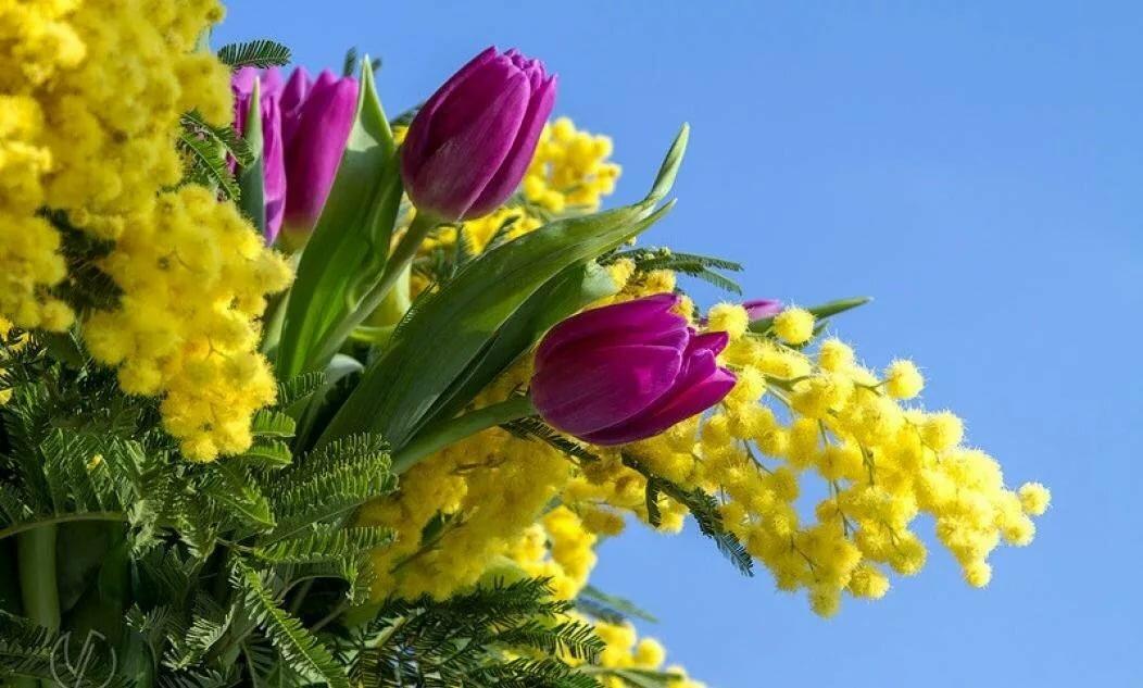 Любовь, весенние картинки тюльпаны мимоза подснежники