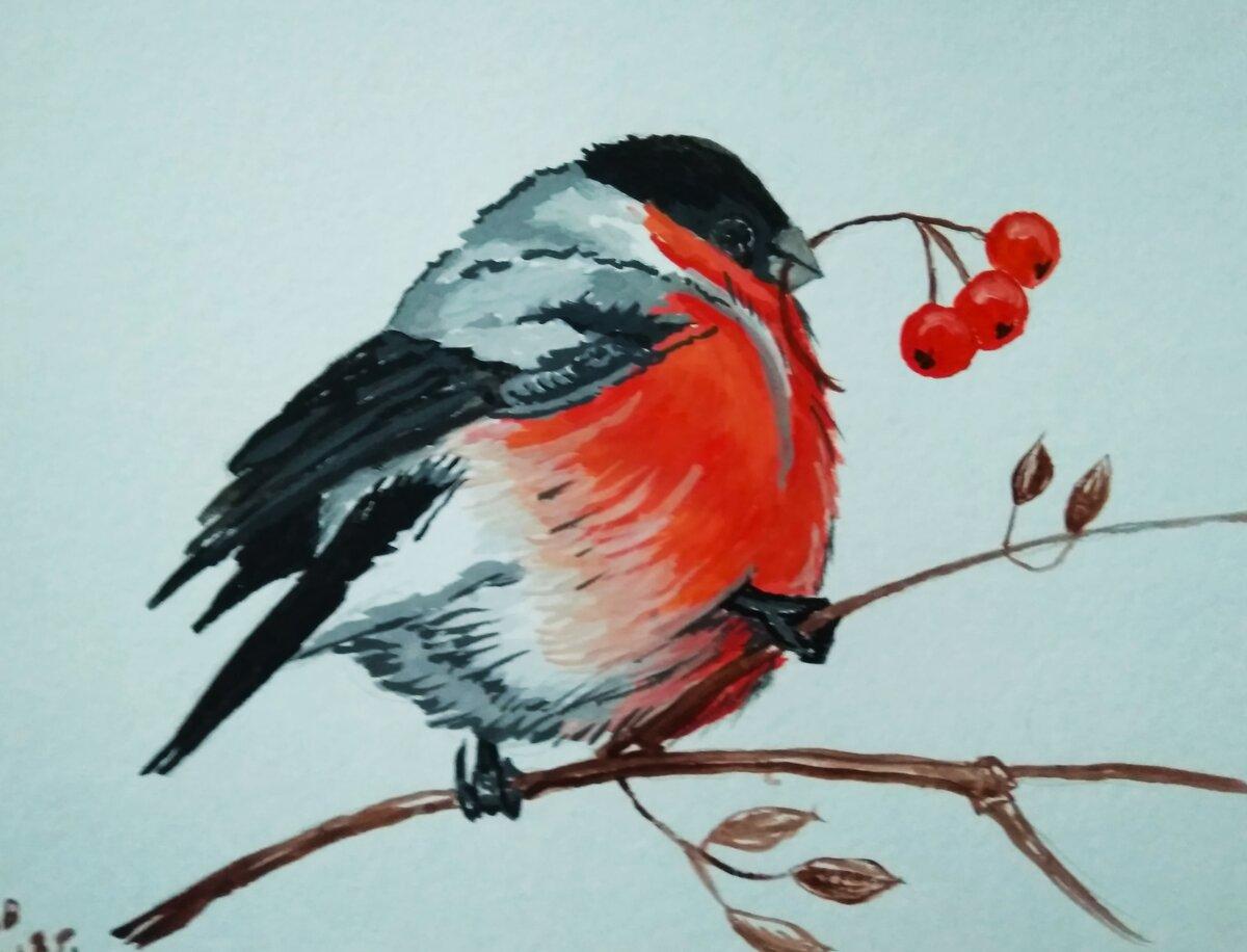 Снегири детские рисунки гуашью