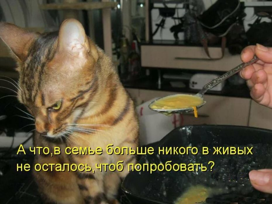 Открыток, надписи к картинкам с котами