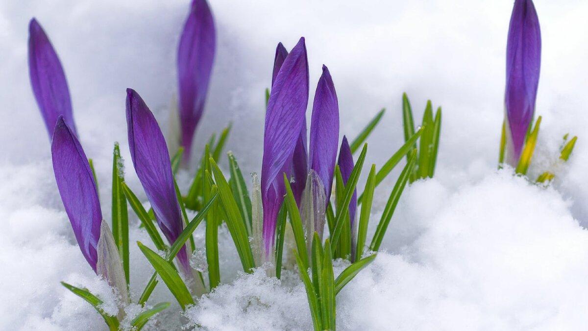 Спасибо вам, весенние открытки весна