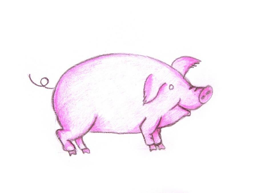 Ведьмами таллин, свинья рисунок карандашом