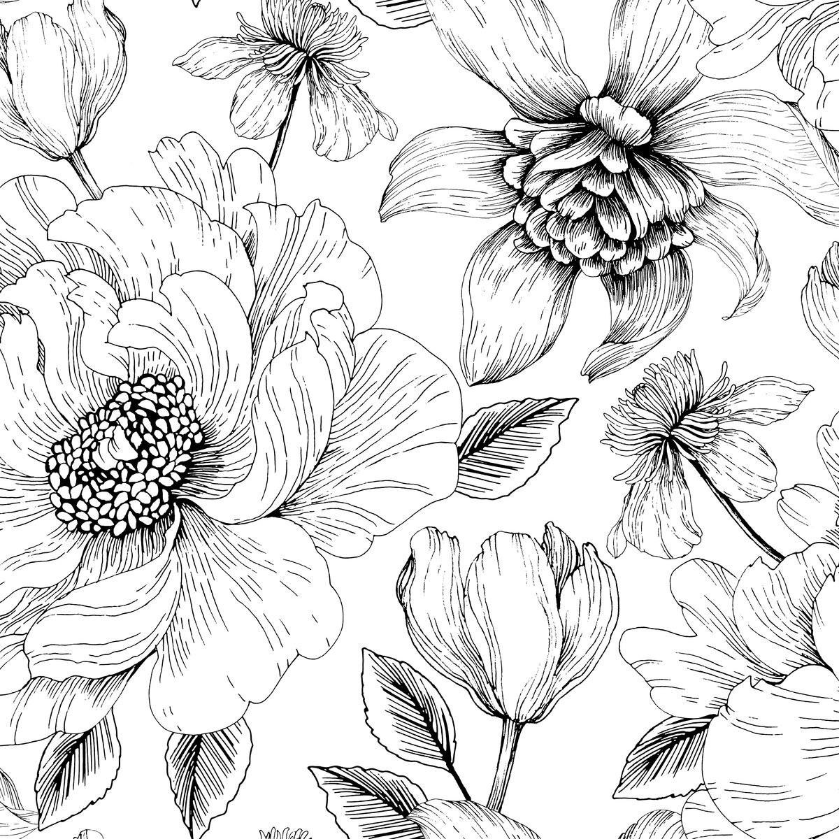 Прикольные медбрат, картинки цветы на белом фоне нарисованные карандашом