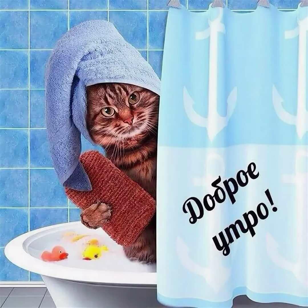 Открытки с котами и добрым утром