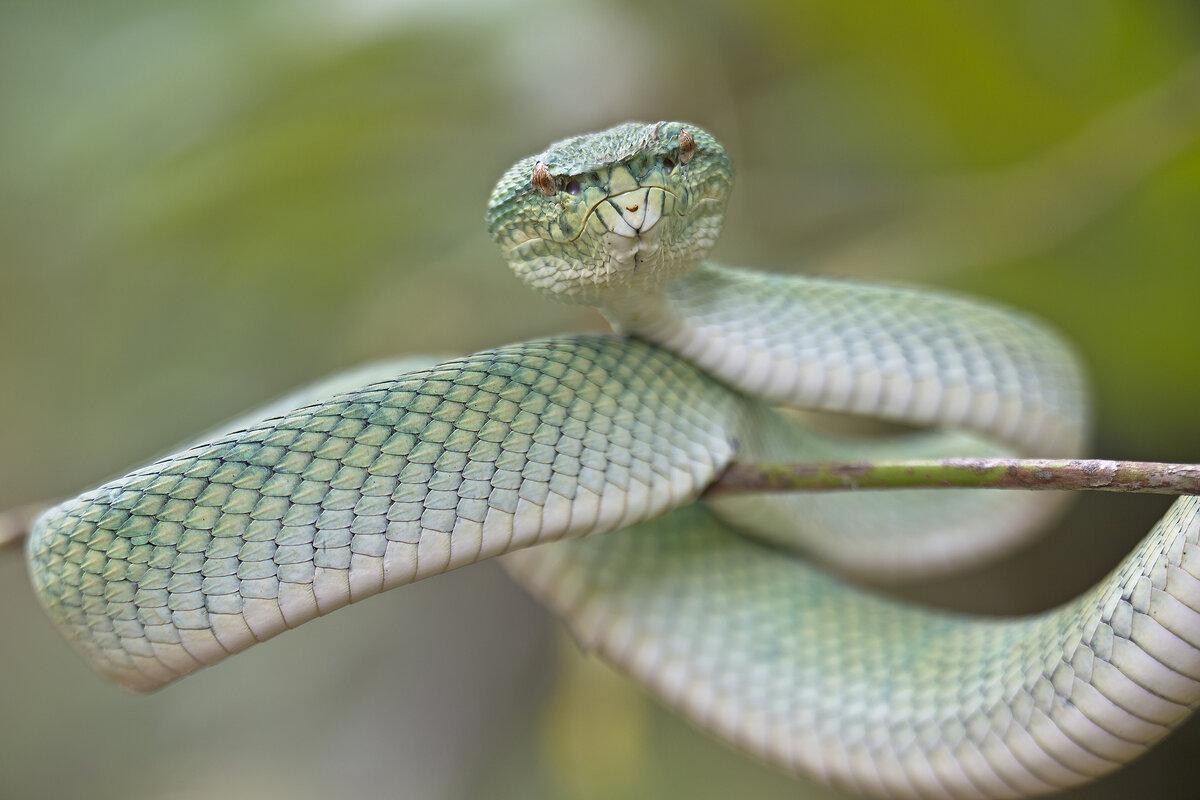 Змея на картинках, телефон картинки