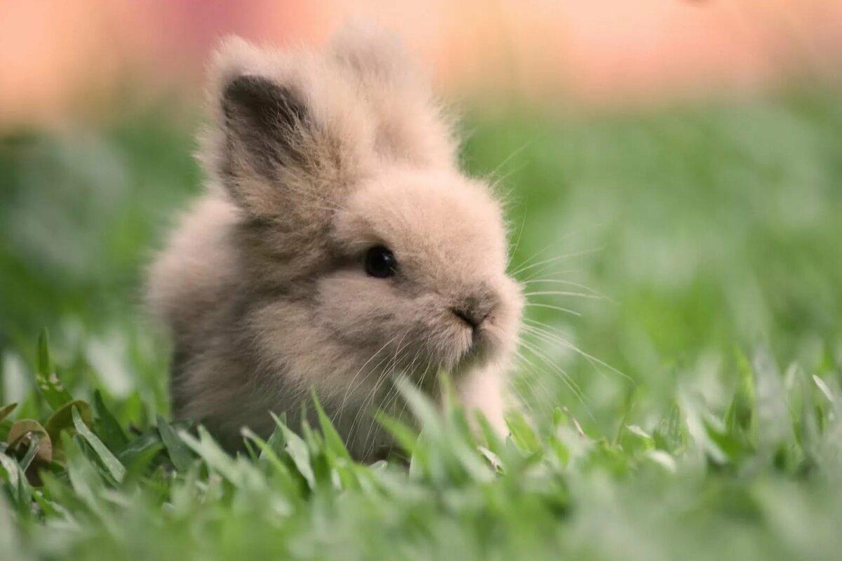 рабочий картинки с кроликами милые терон тоже