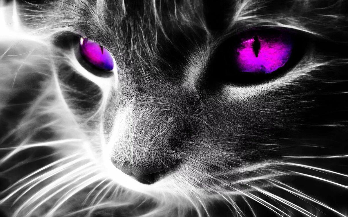 Крутые картинки с котами