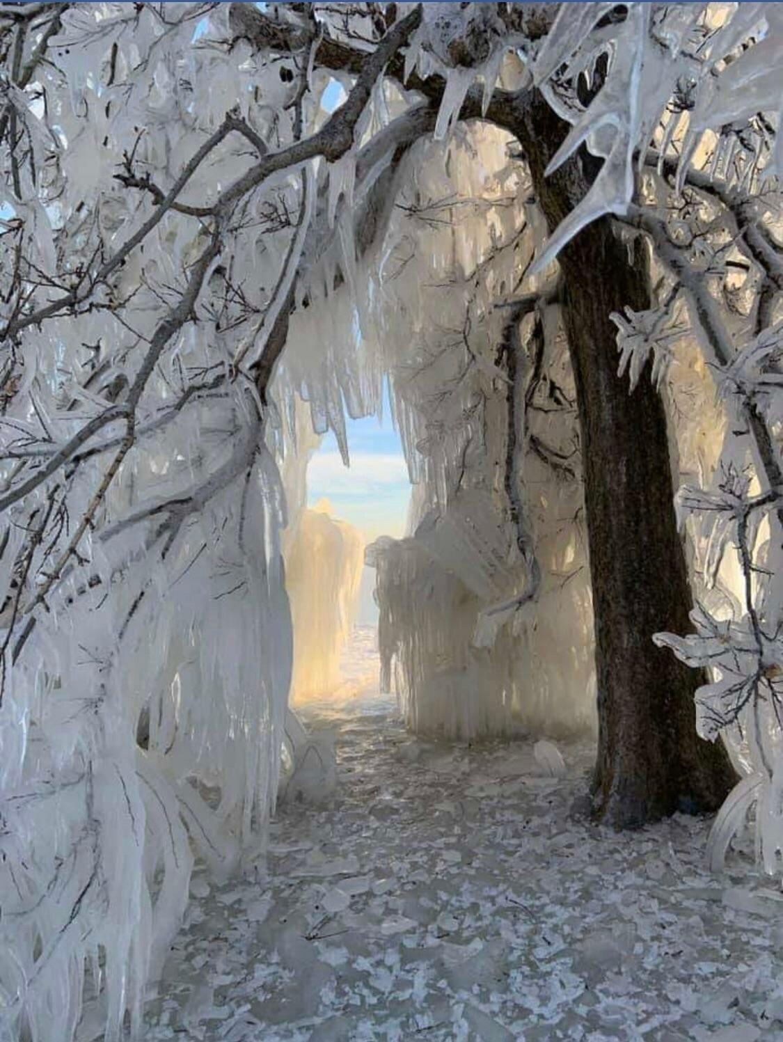 зима необычные деревья фото конечно