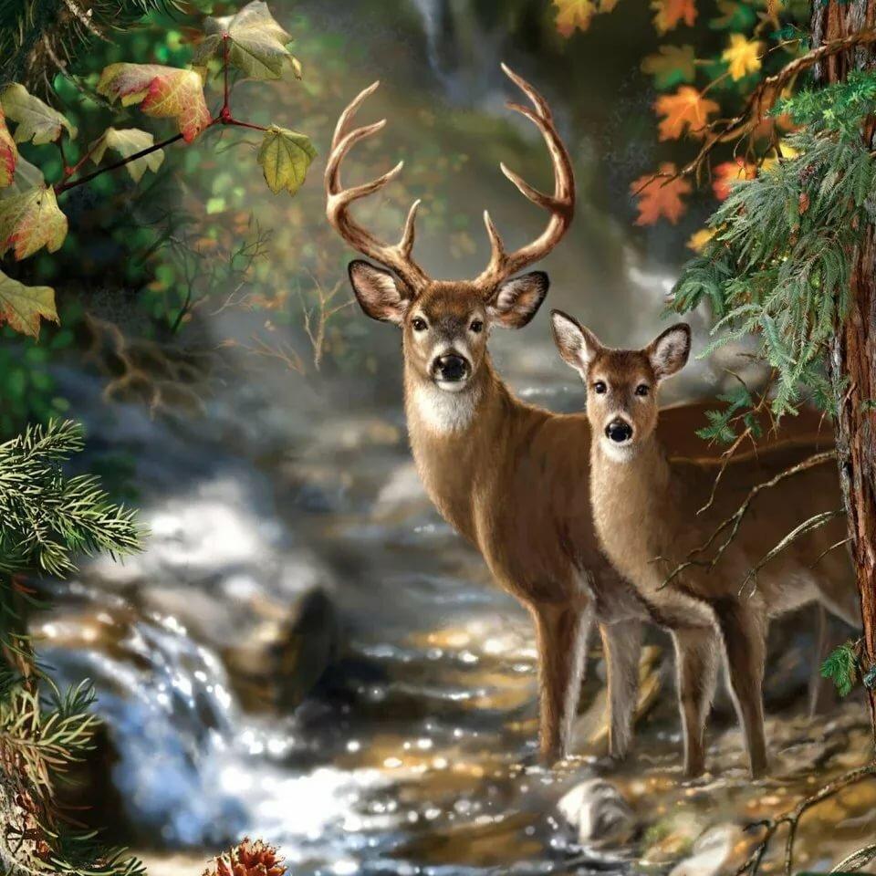 Приколы, картинки на тему природы с животными