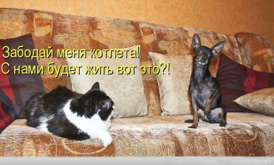 Смешные картинки про животных до слез с надписями фото
