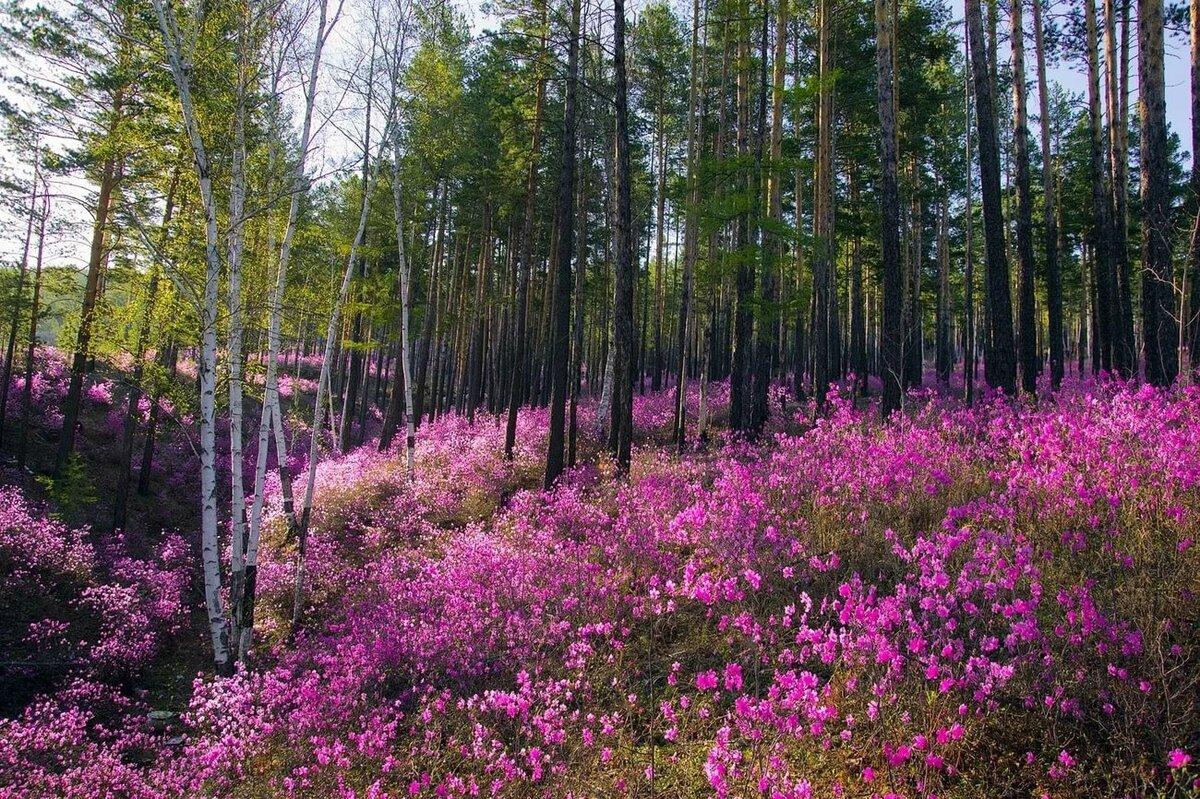 Картинки забайкальского края природа