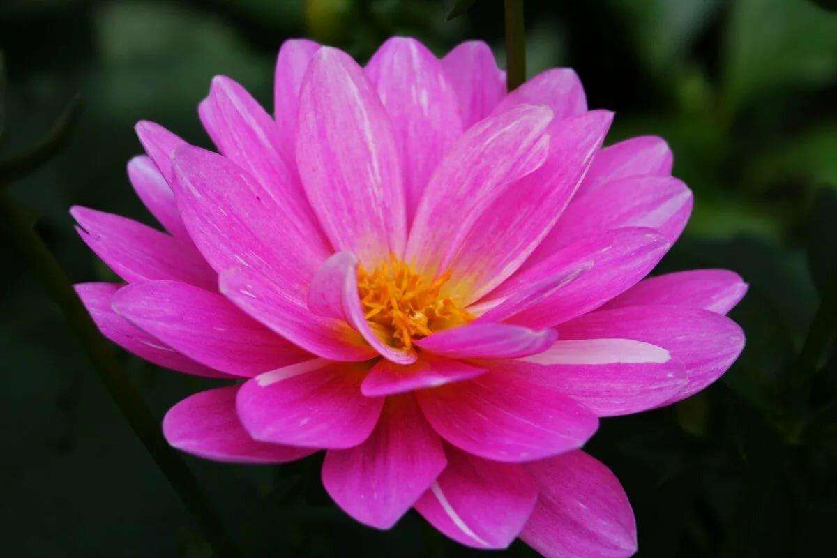 Расцветают вишни анимация картинки цвет