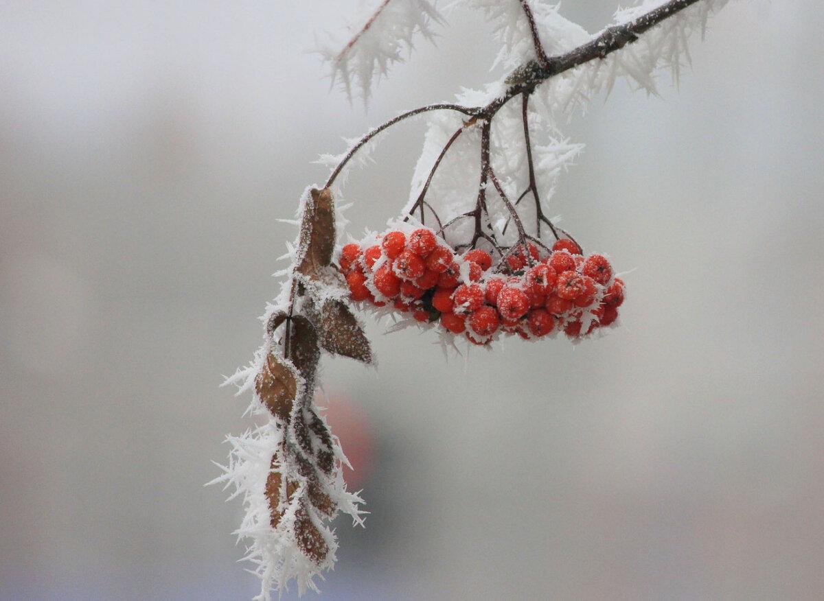 птица заморозок картинки вкусных