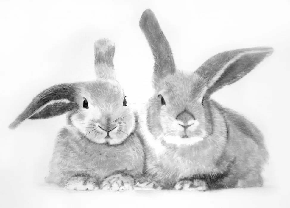 Рисунки кроликов для срисовки