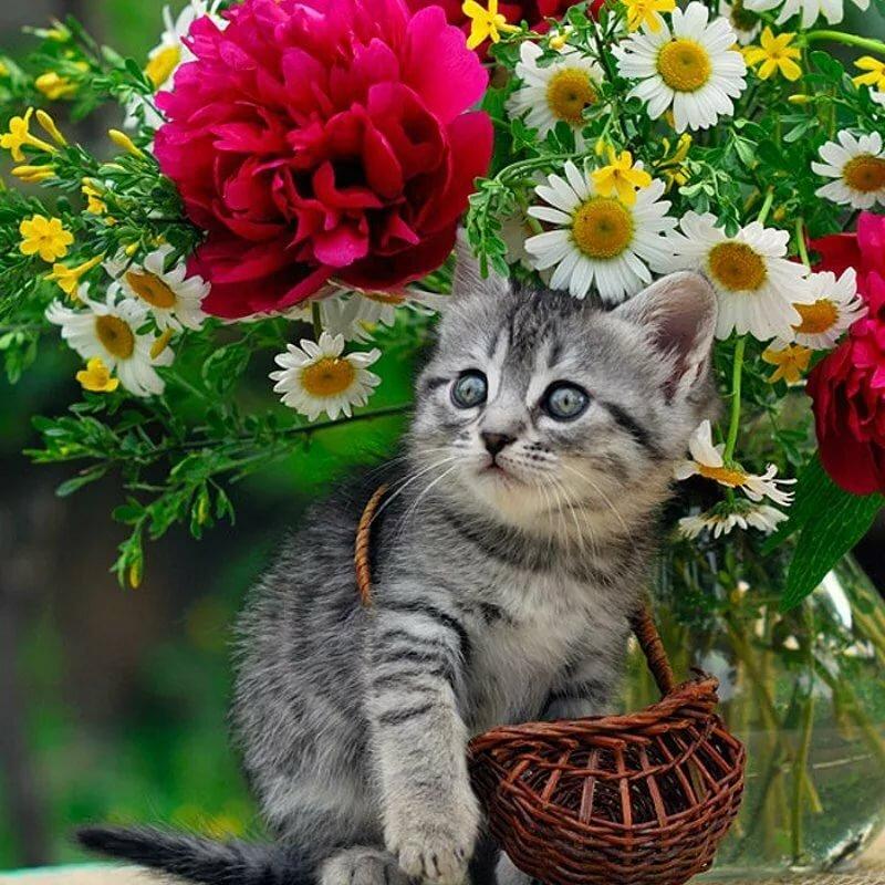 Открытки с цветами и котятами красивые, рисунки картинки красивыми