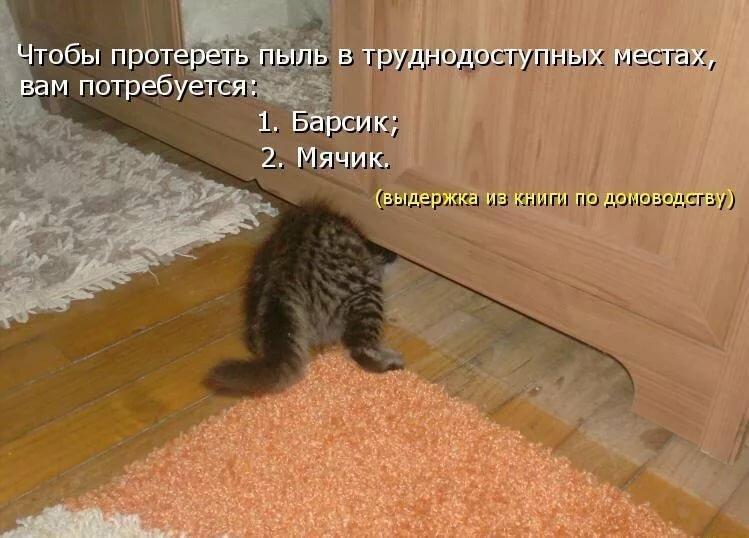 Смешные картинки про животных надписи, поздравления новым