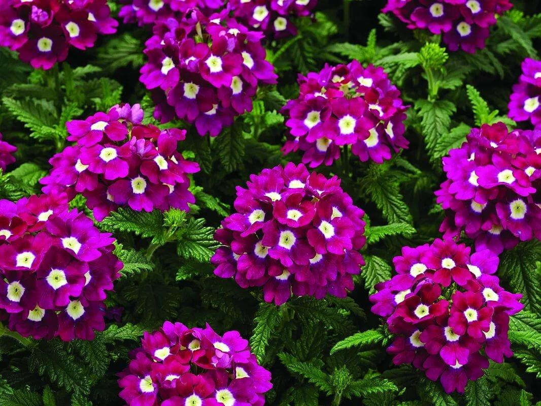 Купить однолетние цветы москва, продажи цветов