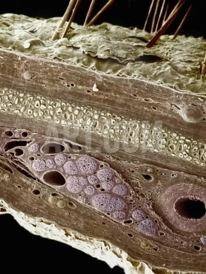 кожа лица под микроскопом фото зелёных насаждений постояльцы