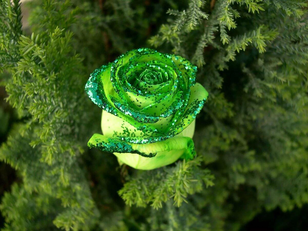День зеленого цвета картинки