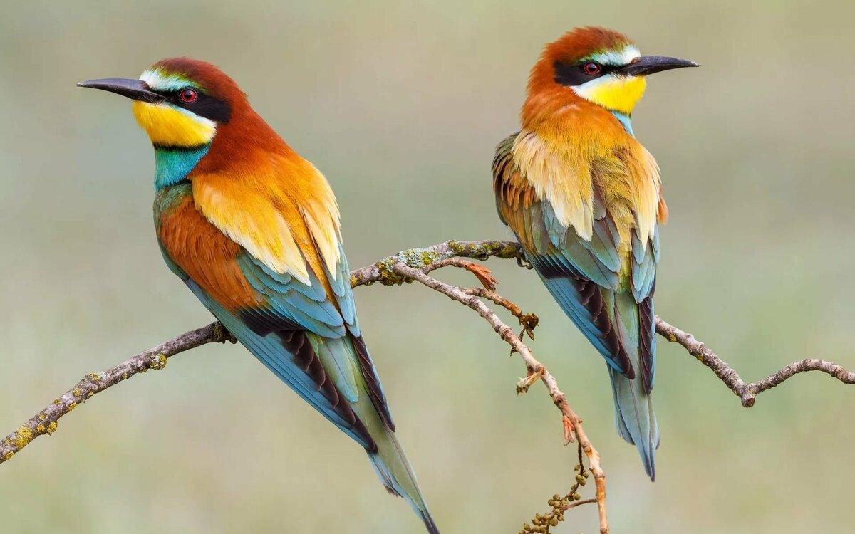 себе картинка с двумя птицами заменить