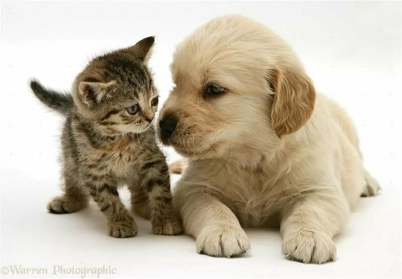 Картинки милых котенок и щенок