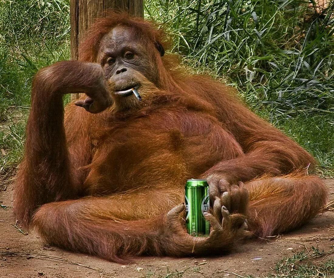 Картинки про обезьян прикольные, открытки рождением