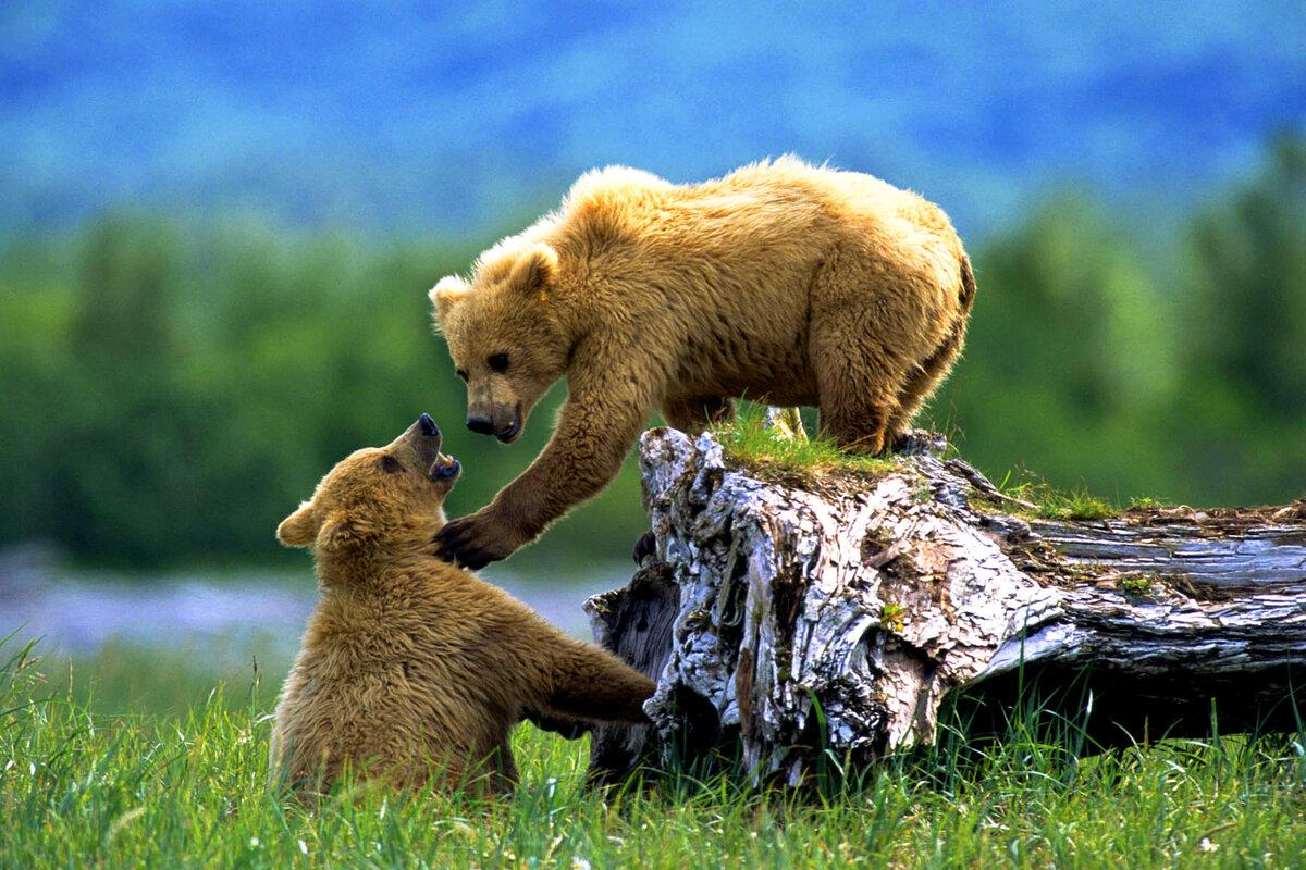 Картинки красивые про природу с животными, днем рождения женщине