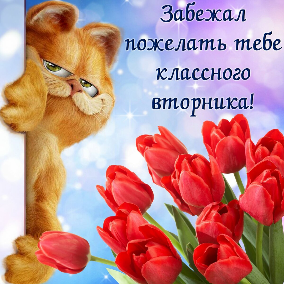 Картинка удачного вторника с приколом, картинки женщина кошка