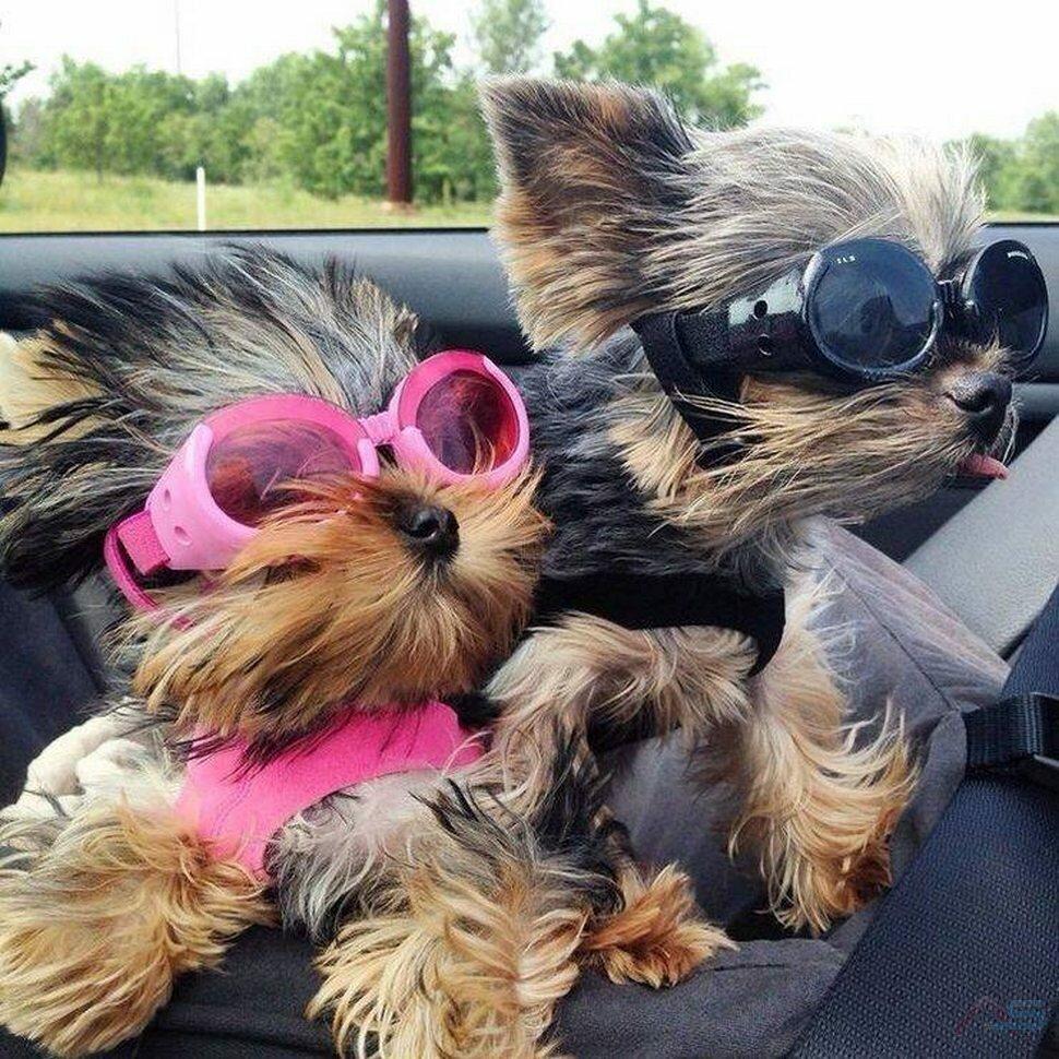 Картинки про доброе утро прикольные собаками, знакомому открытка анимация