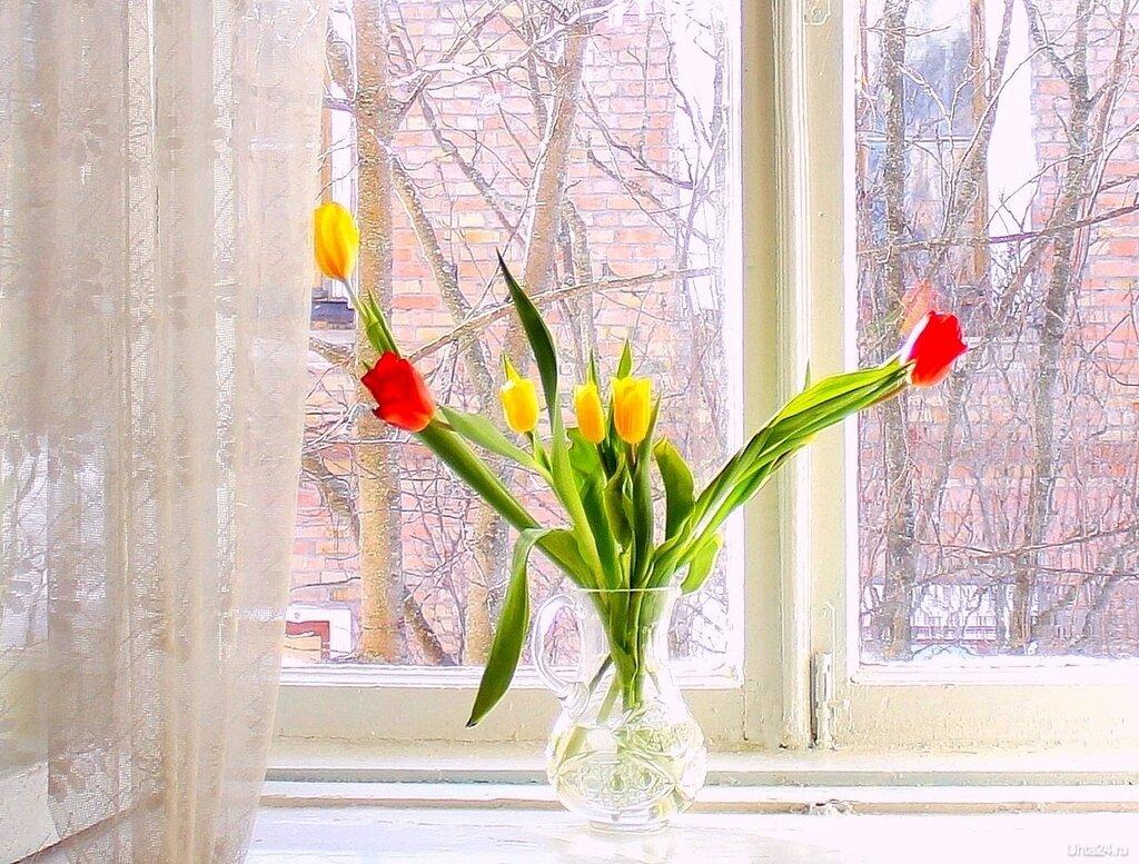 наших букеты на окне весной жизнь невозможно представить
