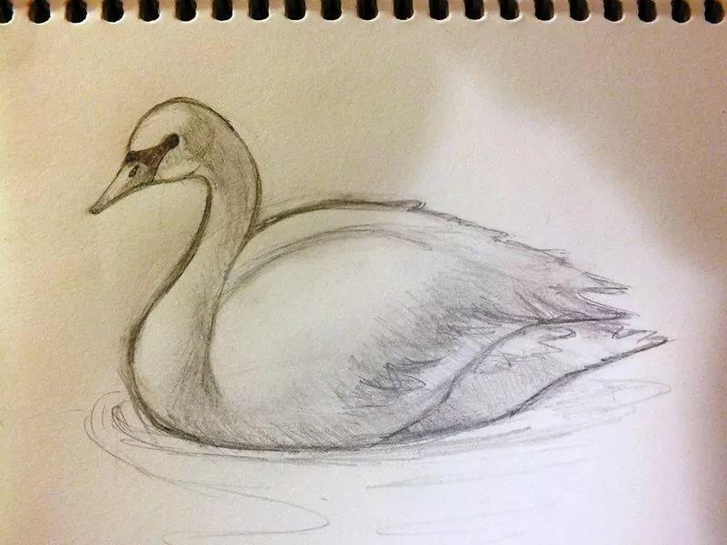 Рисовать лебедя поэтапно картинки