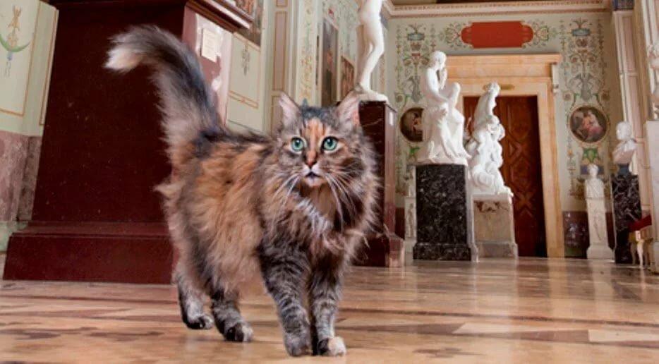 эрмитажный кот фото одну