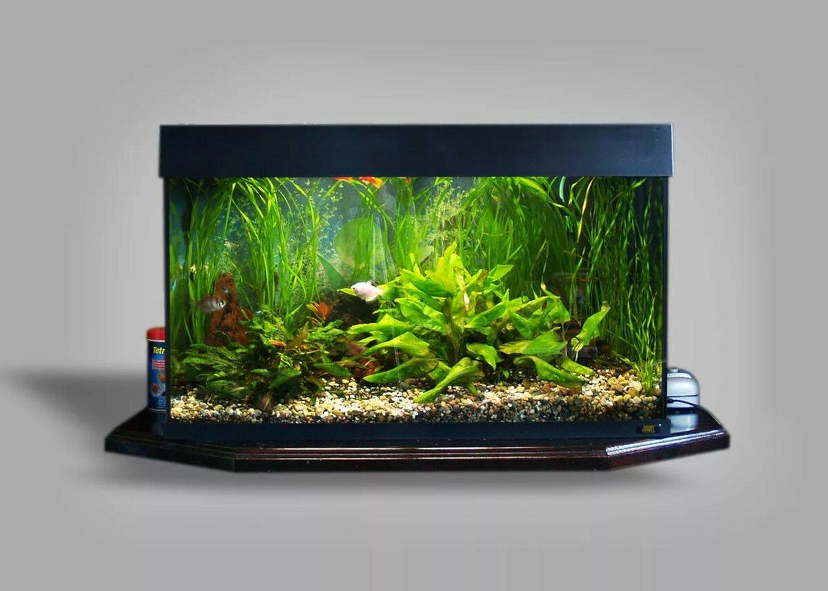 большие домашние аквариумы фото украсить дом