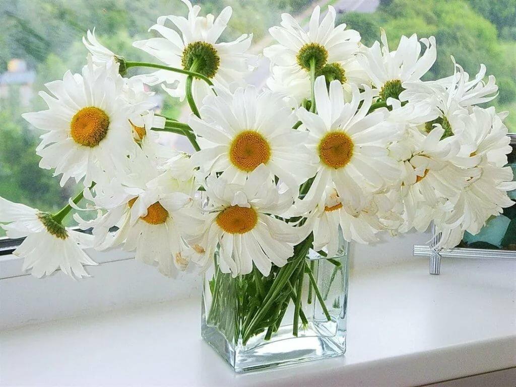 Высказывания, фото цветы открытка ромашки