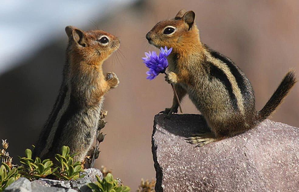 Смешная романтическая картинка, надписью земляне открытки