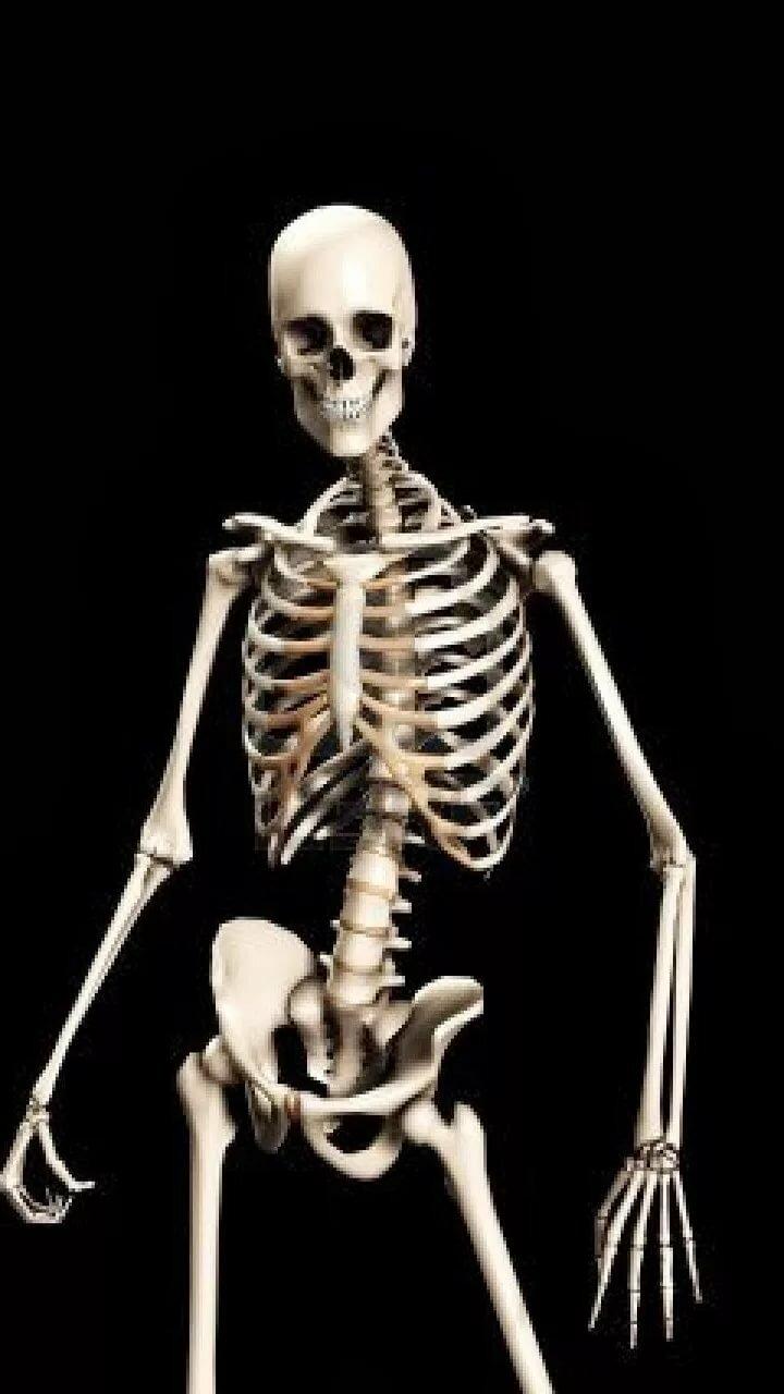 Красивые, прикольные картинки скелета человека