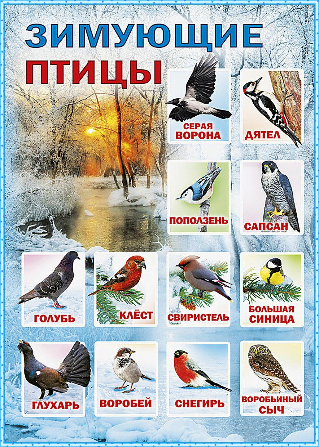 Картинки птиц сибири для детей