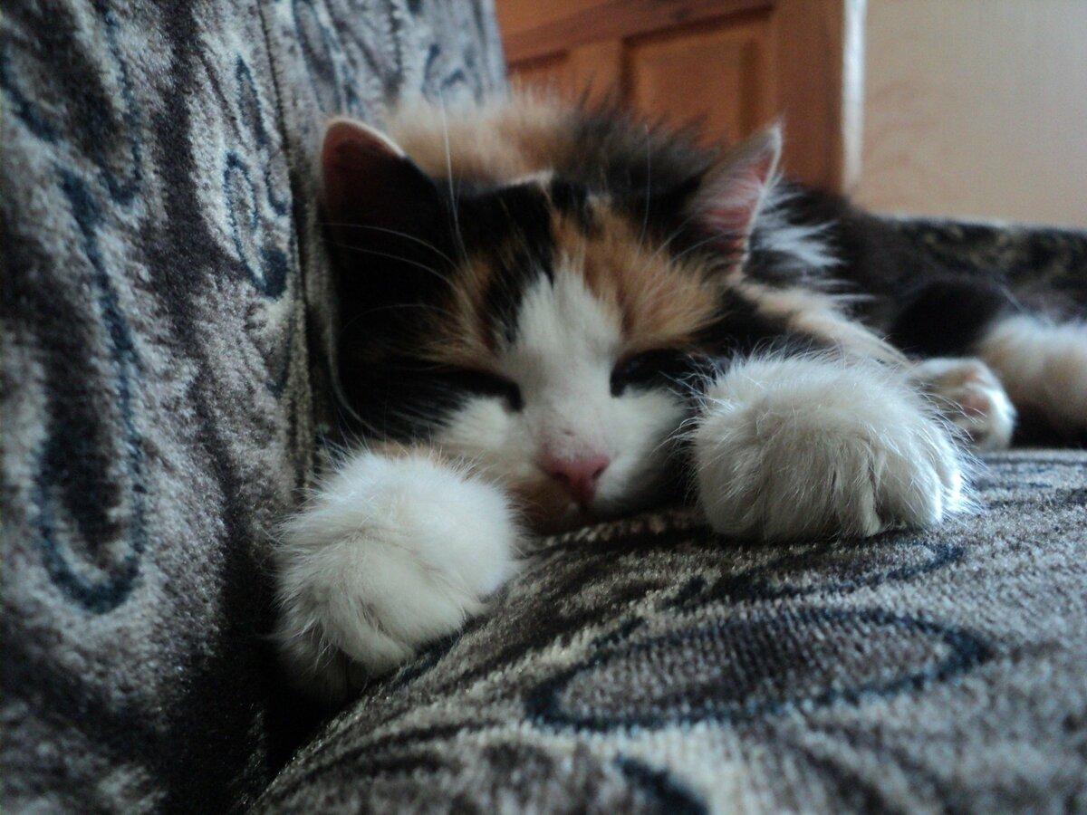 это, картинки котенок спит на диване временем чистим режем