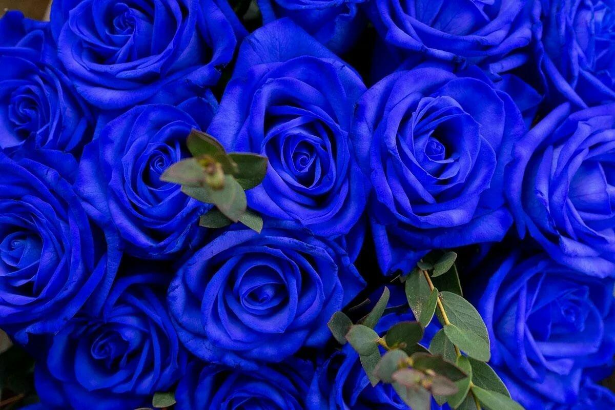 картинки синих оттенков кошка, увы