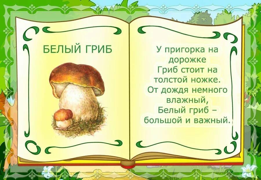Стихи про гриб с картинками